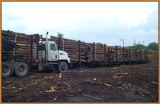 Saylor Logging Services